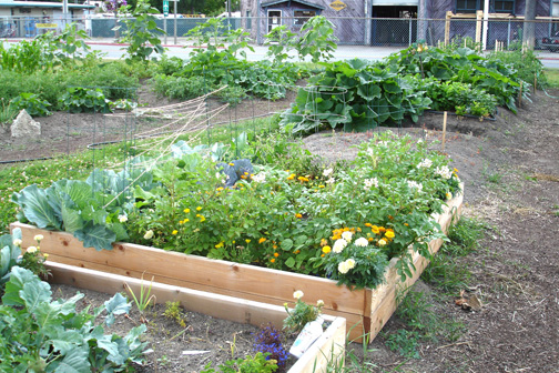 Summer at Community Garden