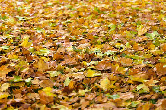 leaves_icon